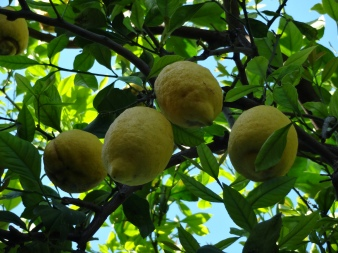 Mary's Lemons